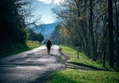 Retiree walking dog
