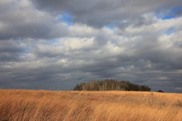 field on a cloudy day iowa