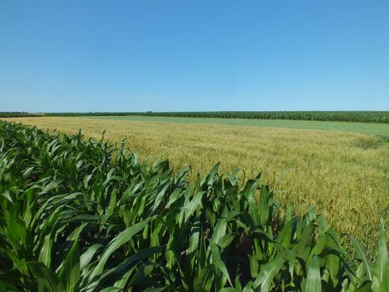 green field in south dakota