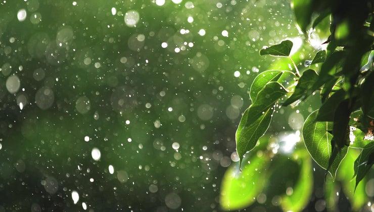 frontal-rainfall