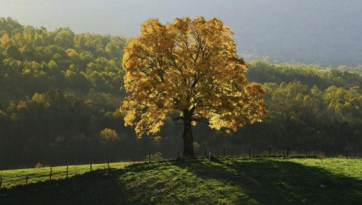 characteristics-four-seasons