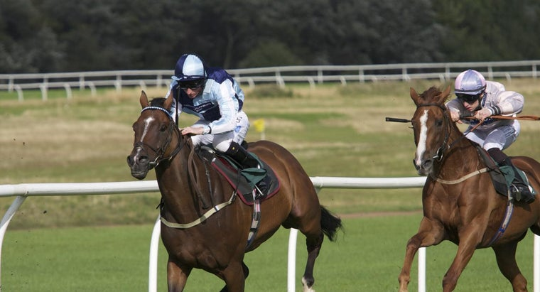 funny-horse-names-night-races