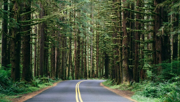 features-temperate-evergreen-forests