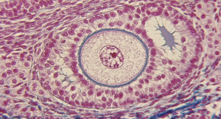 normal-follicle-size