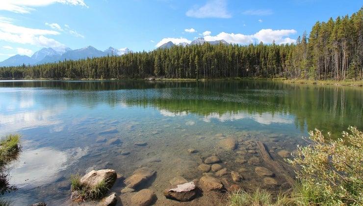 abiotic-biotic-factors-lakes