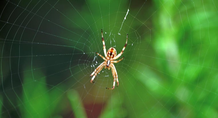 adaptations-spiders