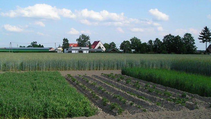 advantages-disadvantages-crop-rotation