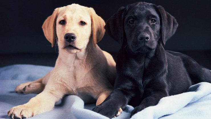 age-can-male-dog-breed