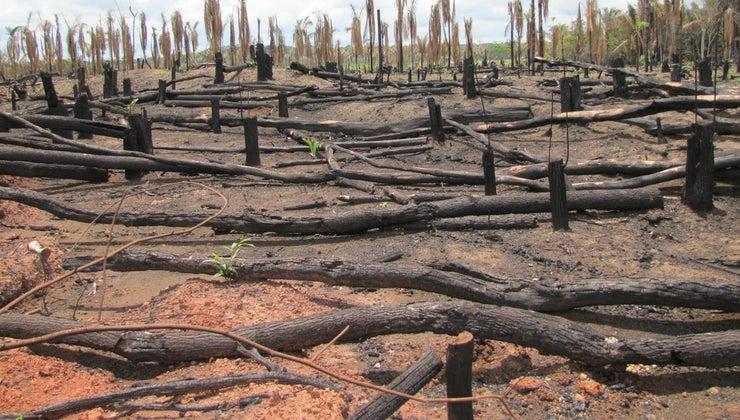 amazon-rain-forest-danger