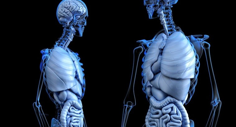 Anatomical 2261006 960 720