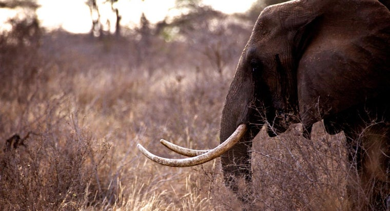 animals-being-poached-africa