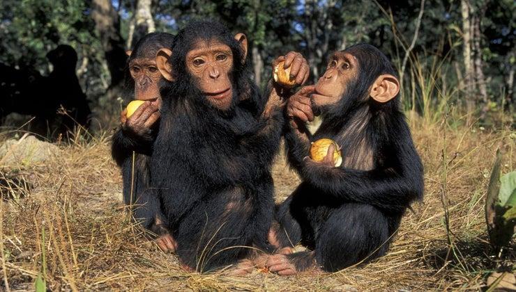 animals-eat-apples