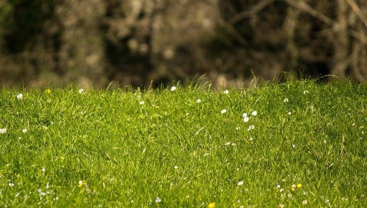 animals-eat-grass