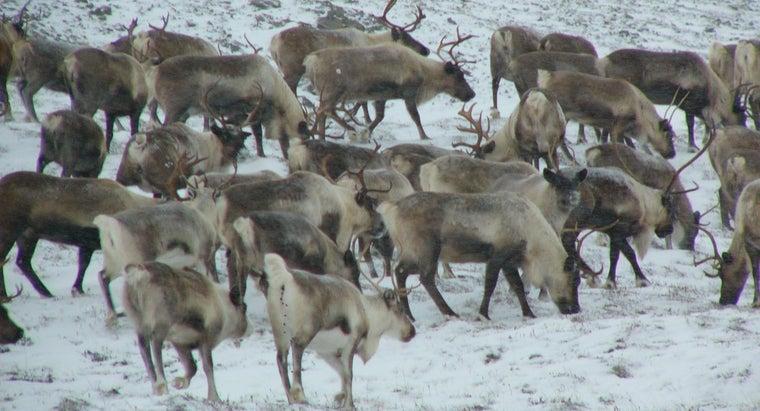 animals-live-tundra