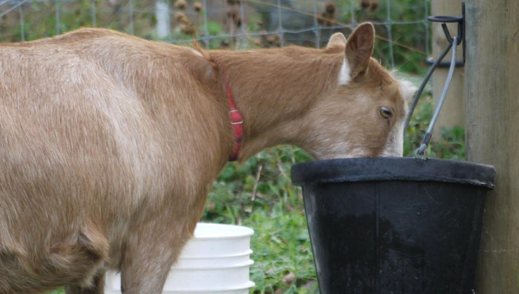 animals-need-water