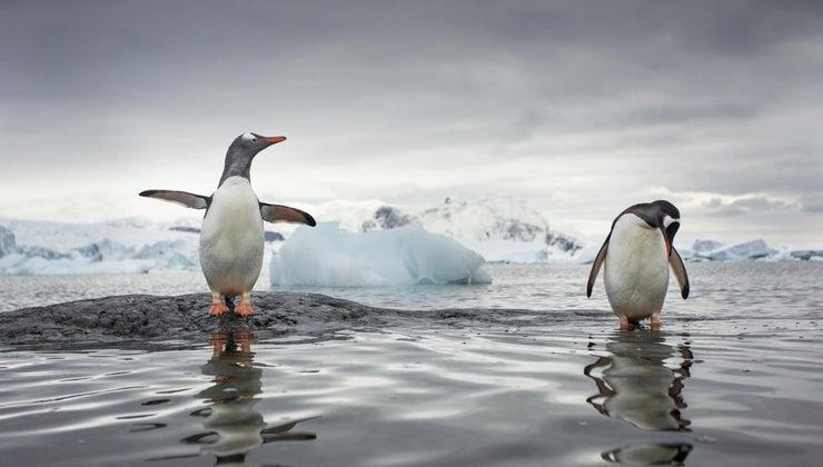 antarctica-located