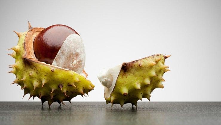horse-chestnuts-poisonous