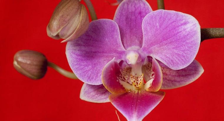 orchids-poisonous