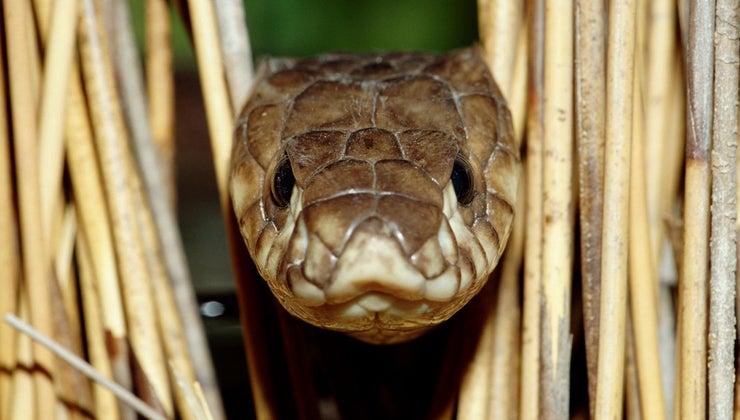 snakes-carnivores-herbivores-omnivores