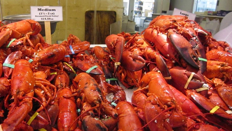 average-life-span-lobster