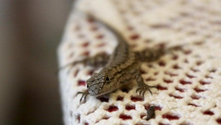 baby-lizards-eat