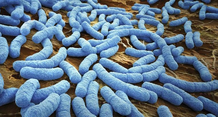 bacteria-breathe