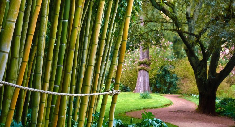 bamboo-poisonous-humans