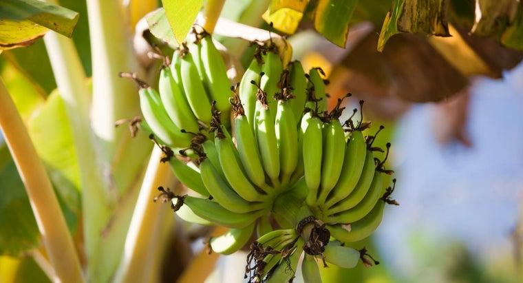bananas-reproduce