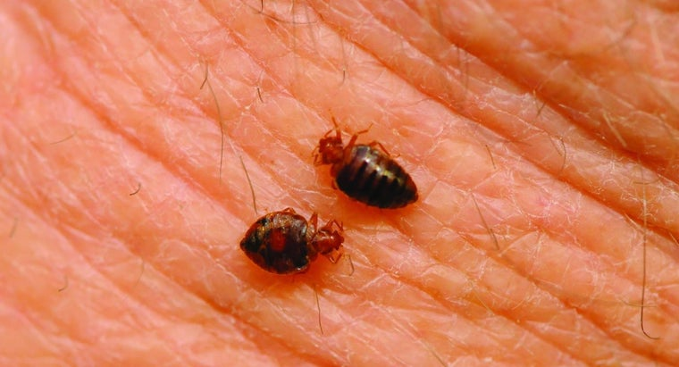 bedbugs-spread
