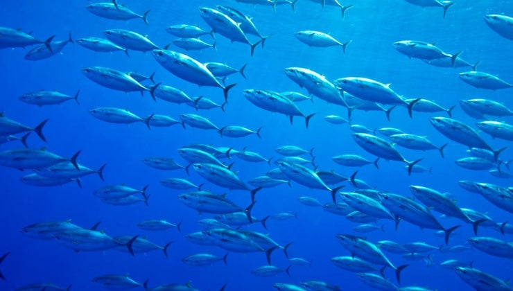 biggest-bluefin-tuna-ever-caught