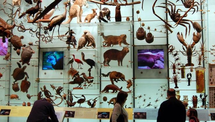 biodiversity-important