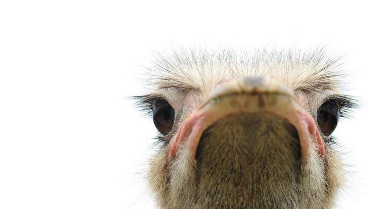 bird-s-eyes-bigger-its-brain