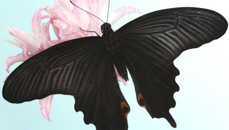 black-butterfly-symbolize