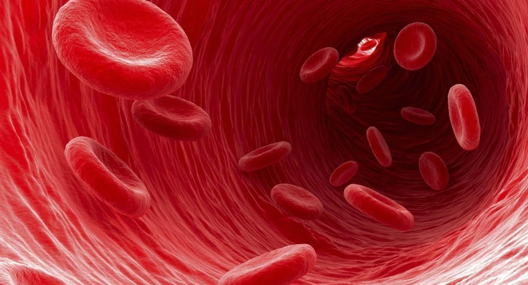 type-blood-cells-carry-waste-away-cells