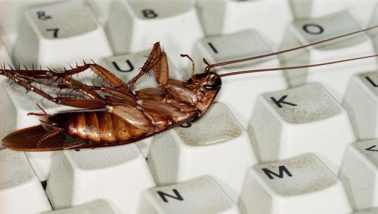 borax-rid-roaches