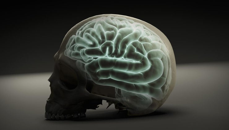 brain-located