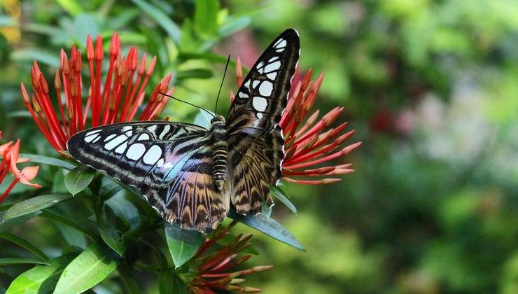 butterflies-live