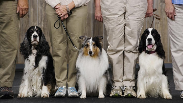 can-akc-dog-show-schedule