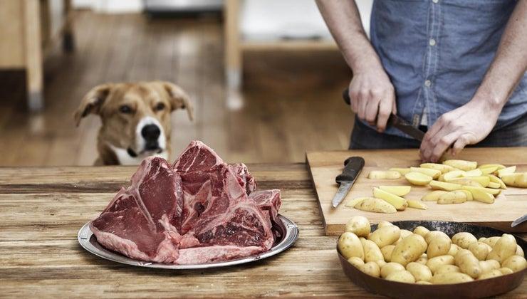 can-dogs-eat-steak-bones