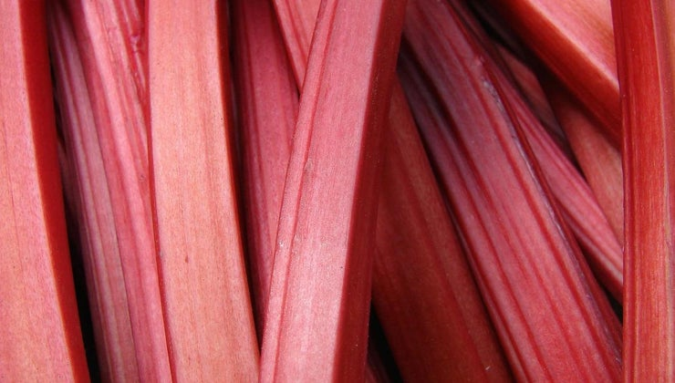 can-eat-wild-rhubarb