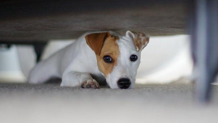 can-give-dog-xanax