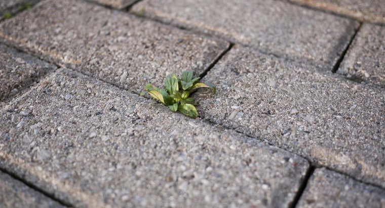 can-kill-weeds-driveway