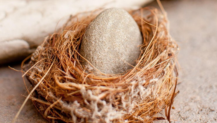 can-one-buy-real-dragon-eggs