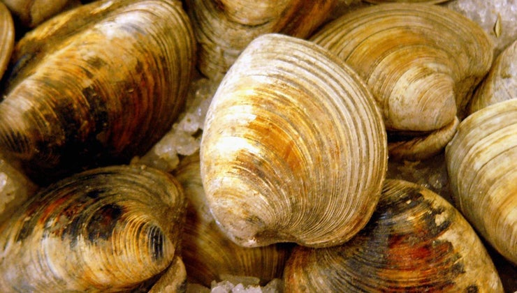 can-one-tell-clams-bad-eat