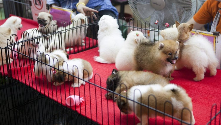 can-puppy-sale-area