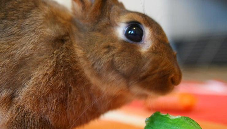 can-rabbits-eat-cucumber