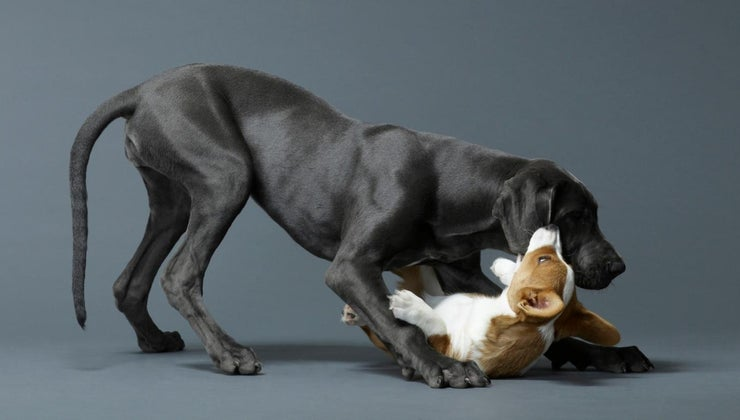 can-stop-dog-biting-other-dogs