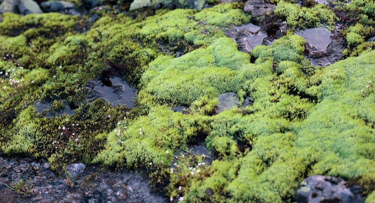can-use-peat-moss-potting-plants