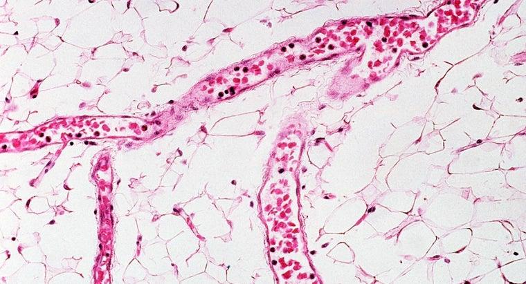 capillary-blood-samples