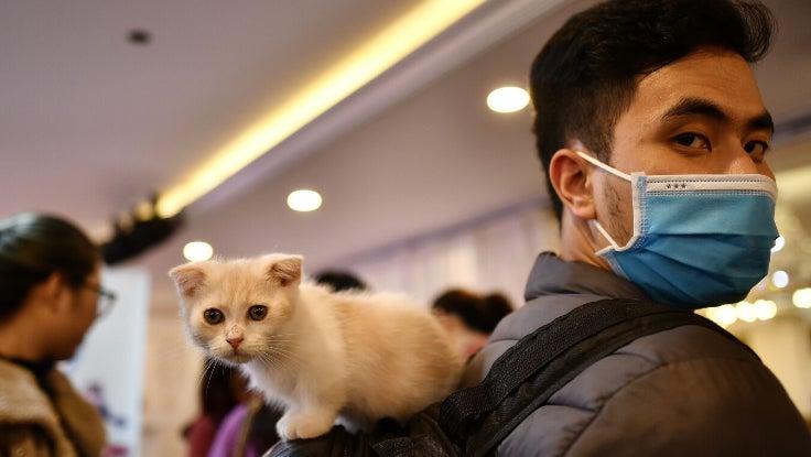 Cat Covid 1